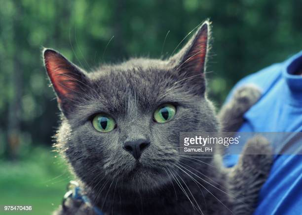 sunny cat - burmese cat stock pictures, royalty-free photos & images