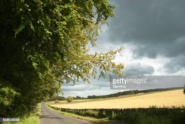 Sunny Country Lane By Farm Fields With Brooding Sky