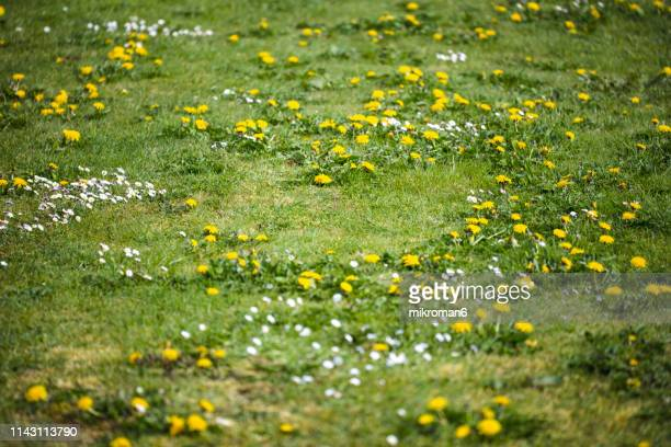 sunny day on meadow. springtime - gras stock pictures, royalty-free photos & images