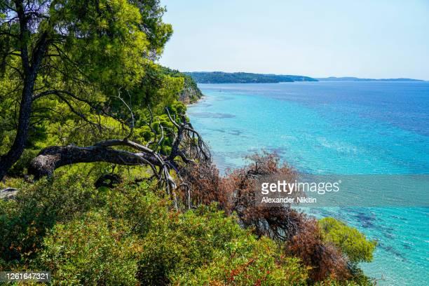 sunny day on the coast of greece. - pineta foto e immagini stock