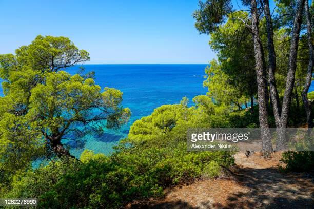 sunny day on the coast of greece. - 松林 ストックフォトと画像