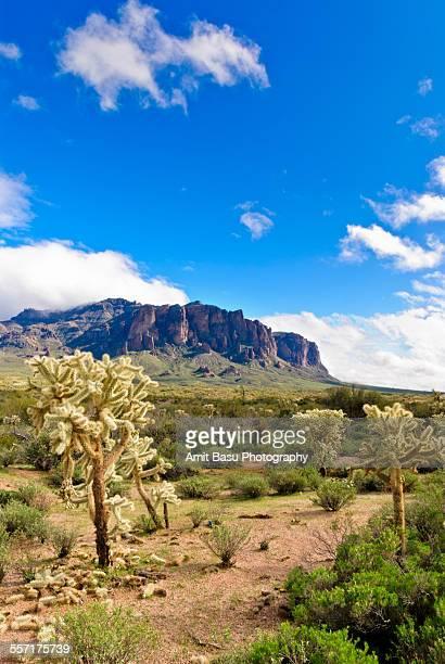 Sunny desert landscape against blue sky, Arizona