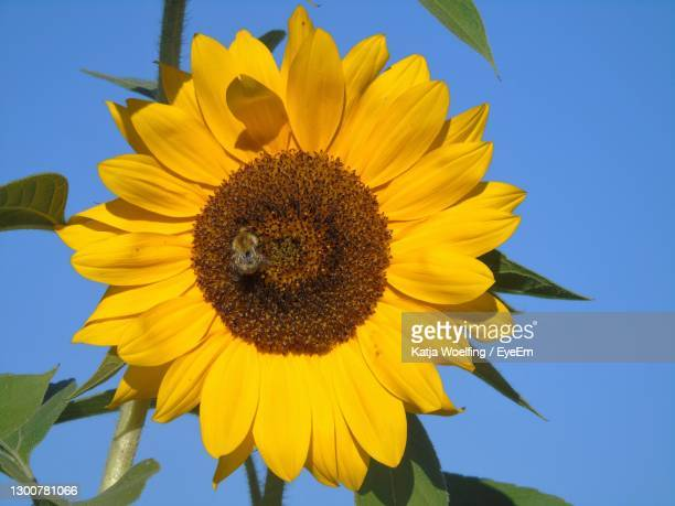 sunny flowerpower - gabon stock pictures, royalty-free photos & images