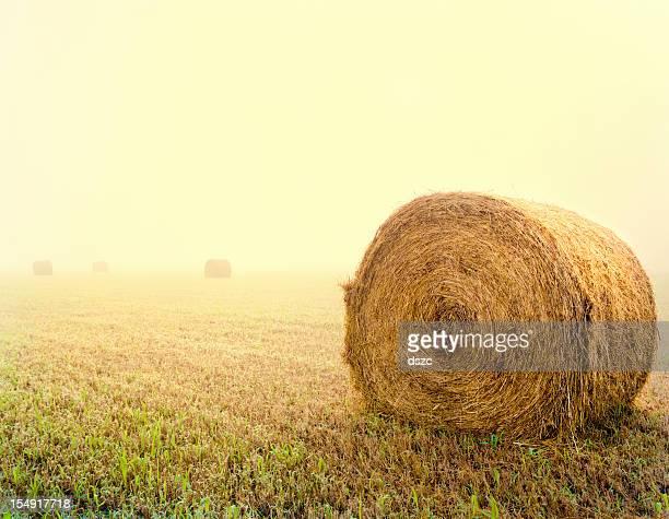 Sonnigen Foggy Morgen Hayfield