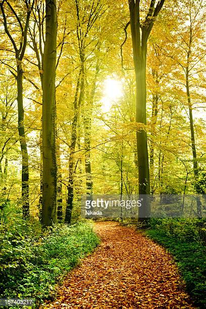 Sunny Forest Path