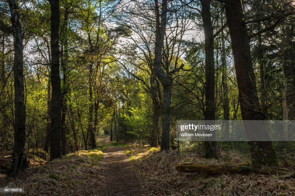 Sunny Forest Path : Stockfoto