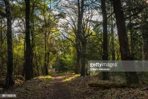 sunny forest path - william mevissen bildbanksfoton och bilder