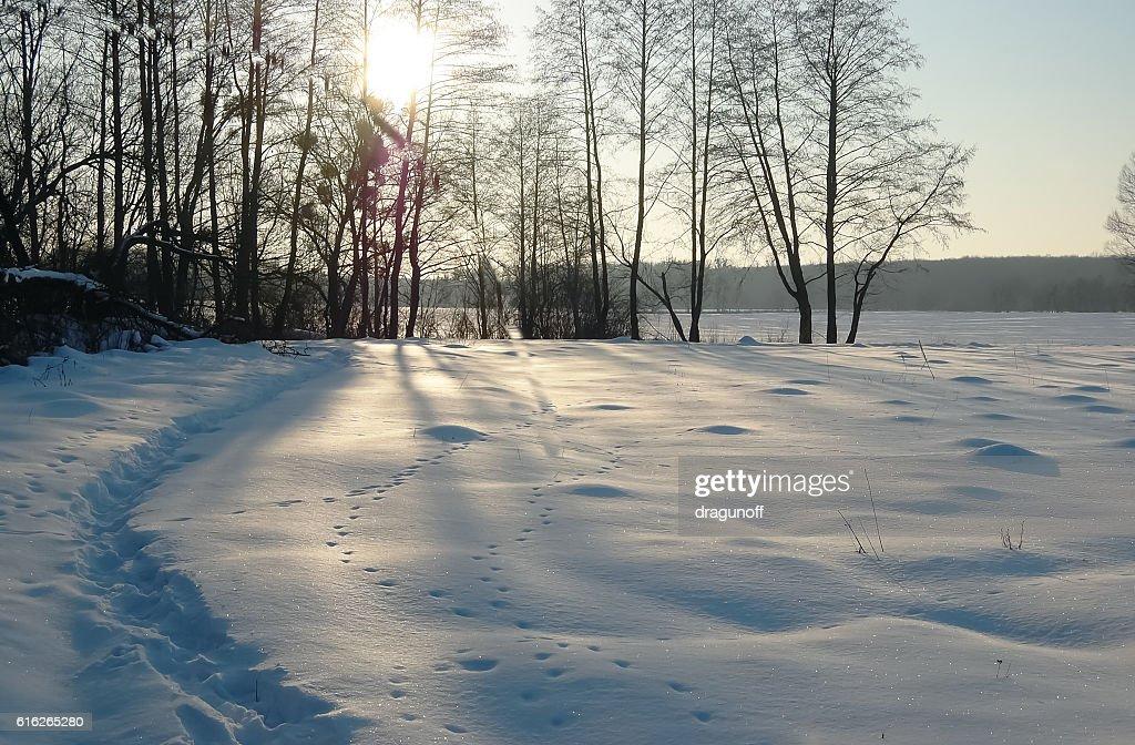 Sunny frosty winter day : Stock Photo