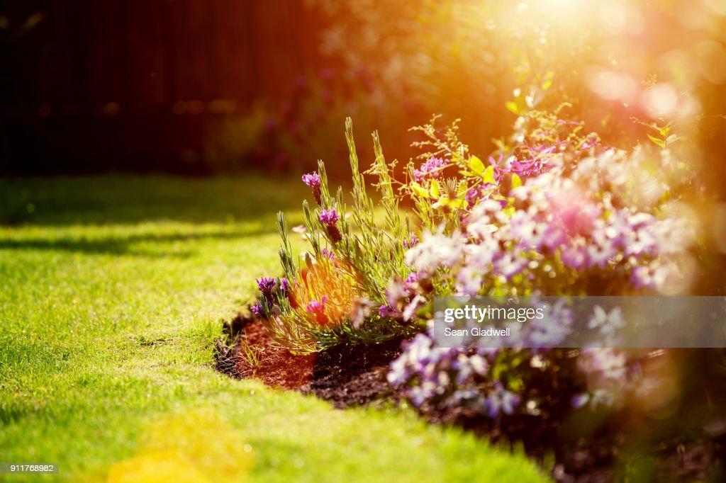 Sunny garden : Stock Photo
