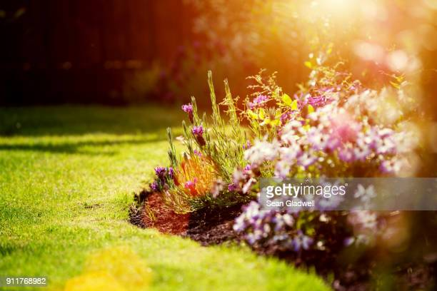 sunny garden - flowerbed stock pictures, royalty-free photos & images