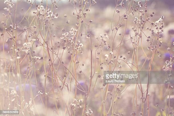 Sunny glowing wild herbs