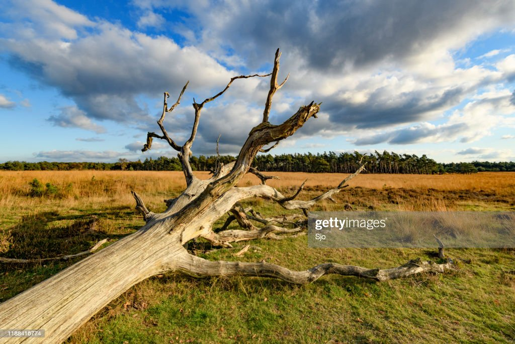 Sunny landscape in the Deelerwoud nature reserve during a beautiful fall day : Stock Photo