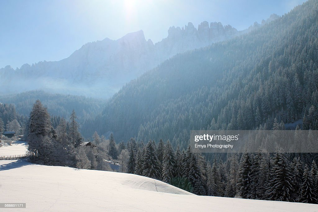 Sunny morning in winter : Stock Photo