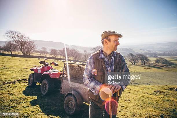 Sunny Morning on the Farm
