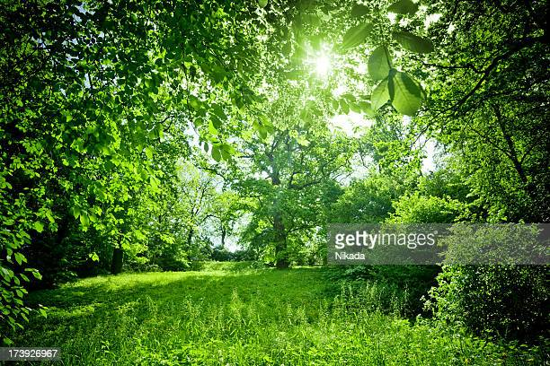 sunny nature - lush stock pictures, royalty-free photos & images
