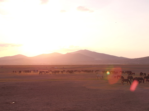sunny photo of horses living freely in nature 955530656