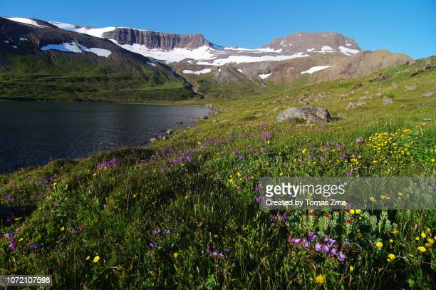 sunny summer evening in the remote hrafnfjörður bay - nature reserve stock pictures, royalty-free photos & images