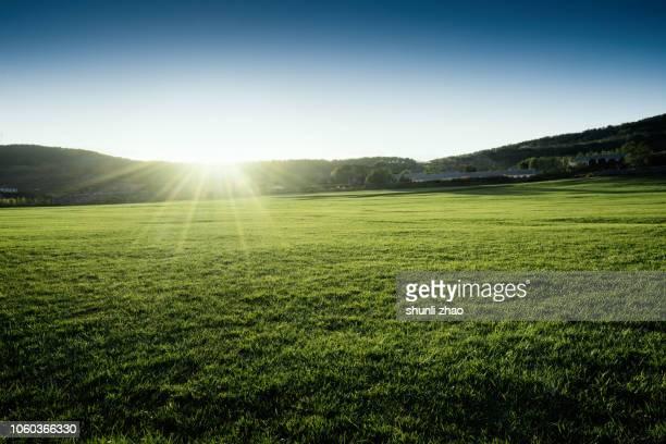 sunny summer landscape - 平地 ストックフォトと画像