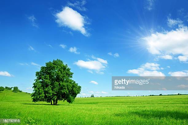 sunny summer landscape - grass area stock pictures, royalty-free photos & images