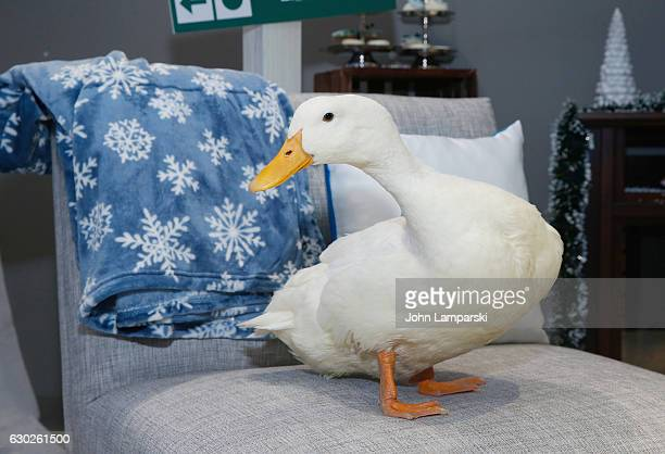 aflac duck pictures and photos getty images