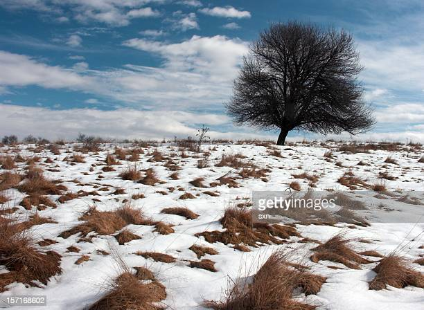 Sunny Winter Hill 6