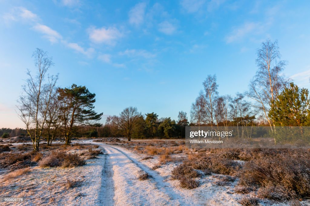 Sunny Winter Path : Stockfoto