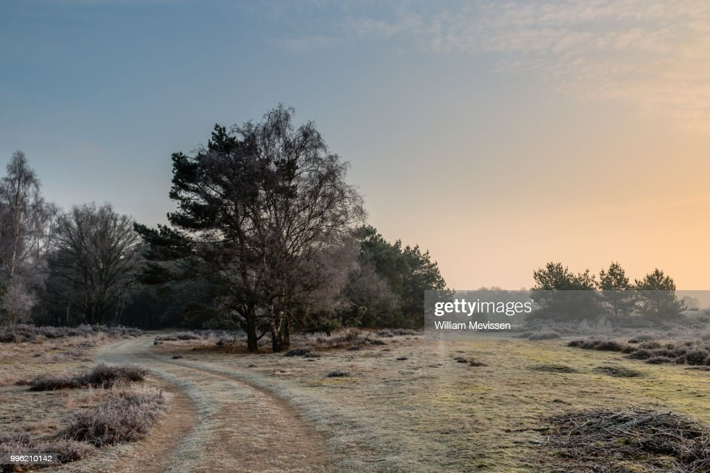 Sunny Winter Path : Stockfoto