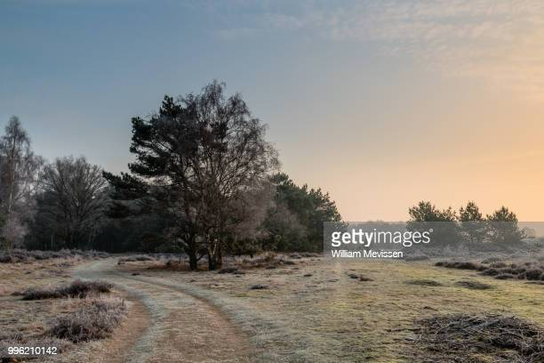 sunny winter path - william mevissen fotografías e imágenes de stock