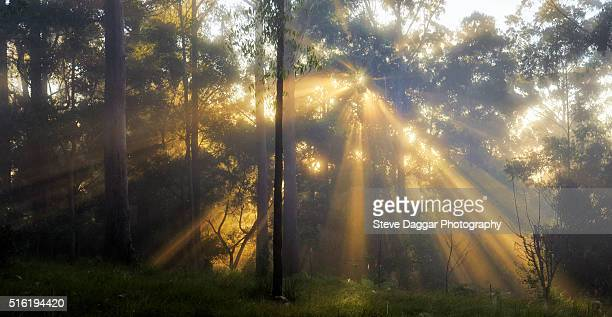 Sunrays in the mist