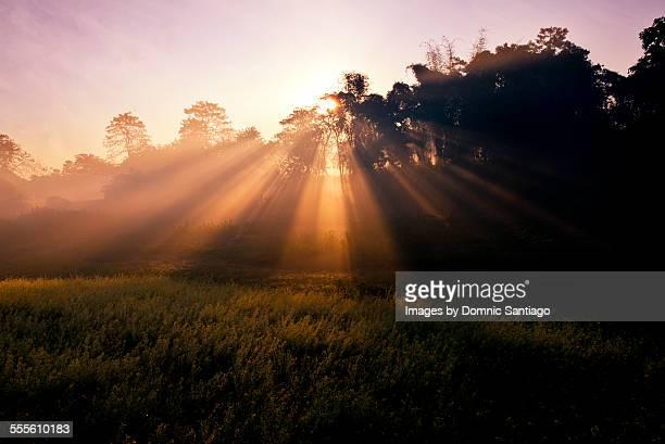 Sun-rays on the field