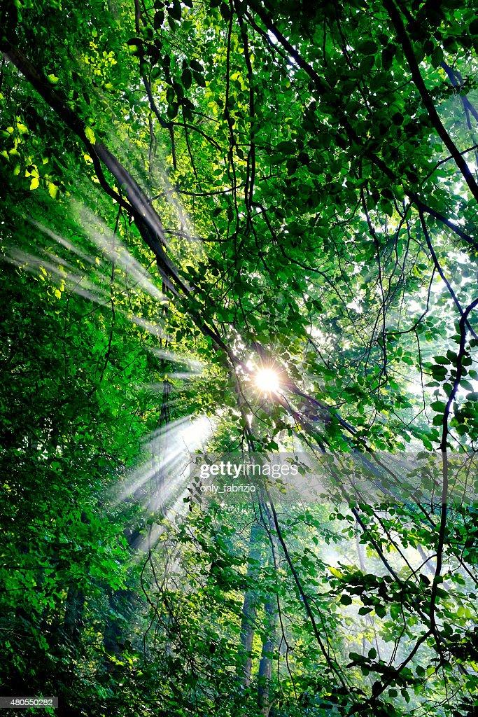 Sunrays : Stock Photo