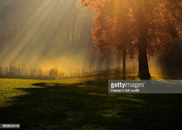 sunrays shining down over tree