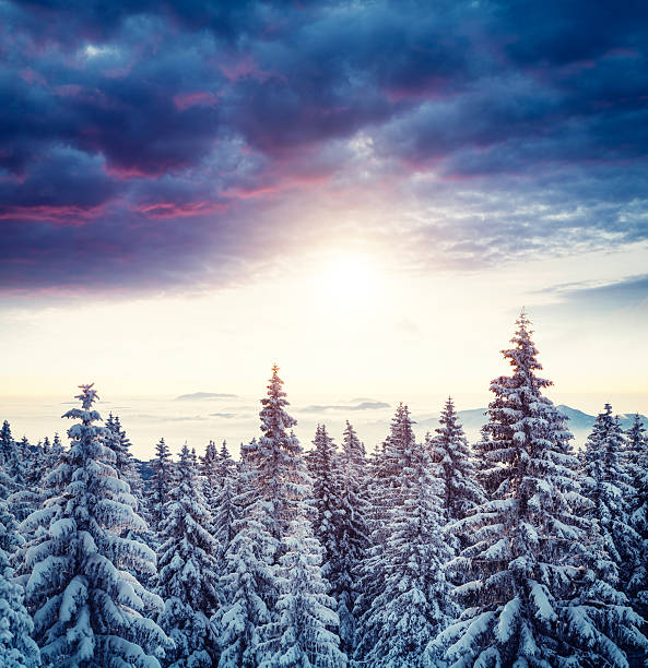 Sunrise Above The Winter Forest Wall Art