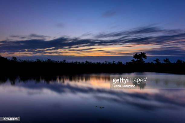 sunrise along the anhinga trail, everglades national park, flori - anhinga_trail stock pictures, royalty-free photos & images