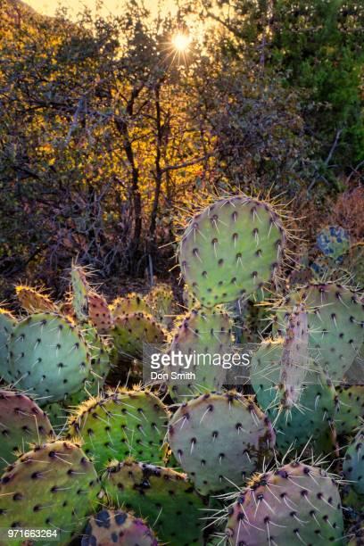 Sunrise and Desert Cacti Oak Creek