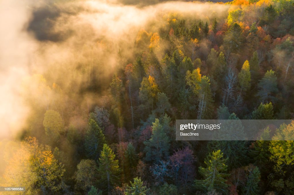 Sunrise and morning mist in the forest : Photo