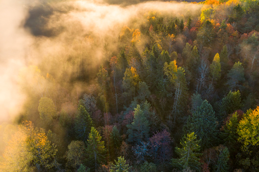 Sunrise and morning mist in the forest - gettyimageskorea