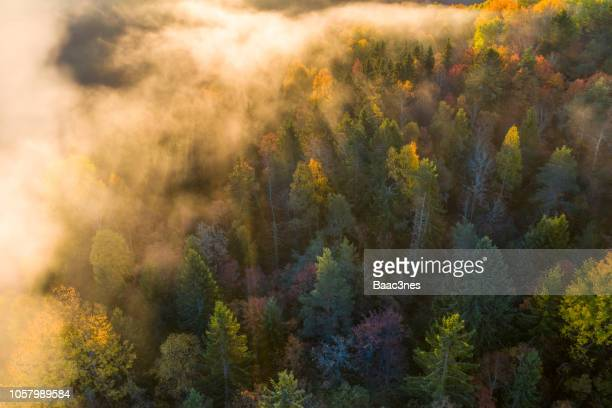 sunrise and morning mist in the forest - jahreszeit stock-fotos und bilder