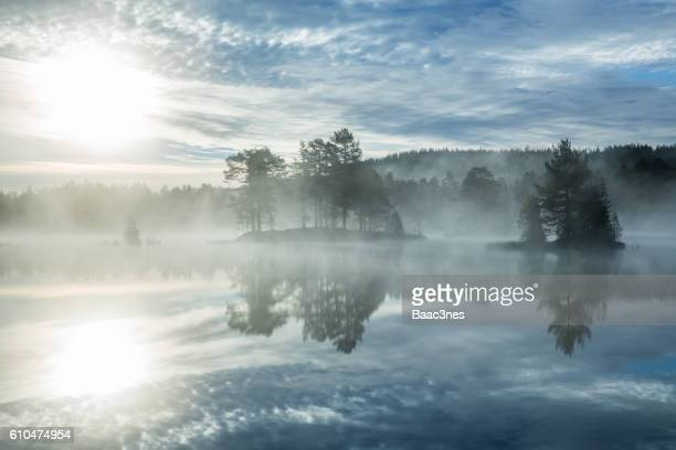 Sunrise and morning mist in the forest