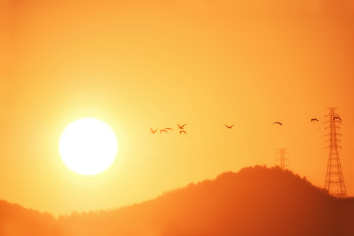 Sunrise and White-fronted Geese - gettyimageskorea
