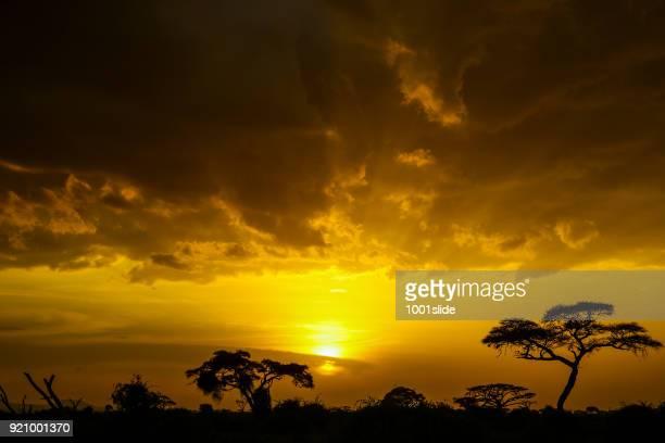 sunrise at amboseli - amboseli stock photos and pictures