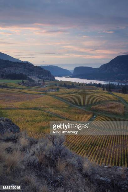 Sunrise at Blue Mountain Vineyard during fall color change on the vines, South Okanagan Valley, British Columbia, Canada