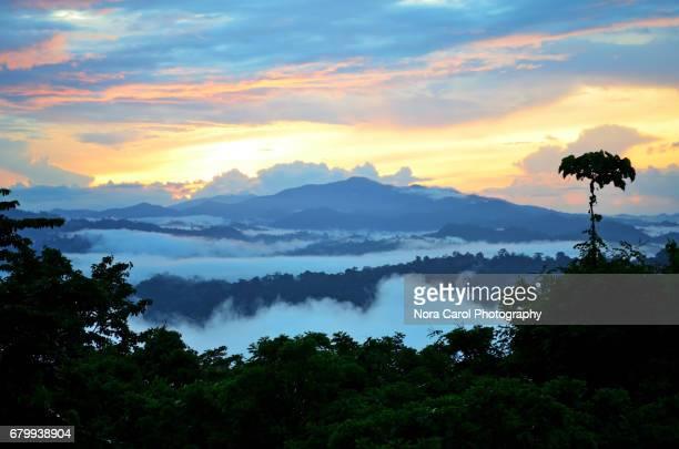 Sunrise at Danum Valley, Borneo.