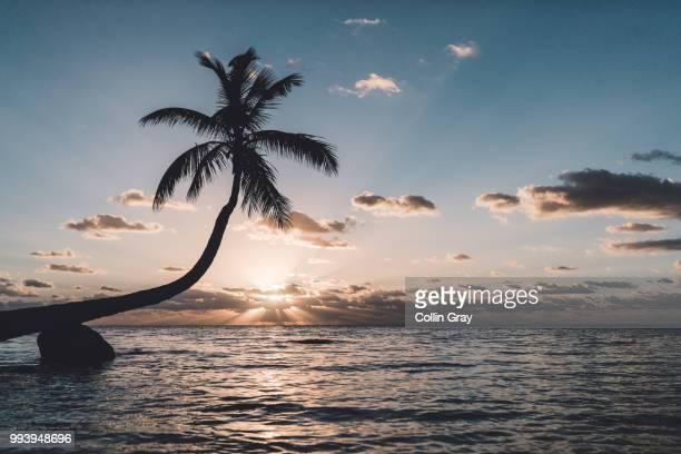 sunrise at islamorada key, florida - collin key stock-fotos und bilder