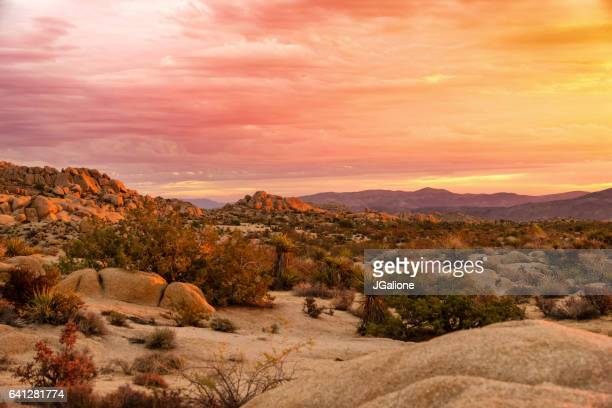 sunrise at joshua tree national park - joshua tree stock photos and pictures