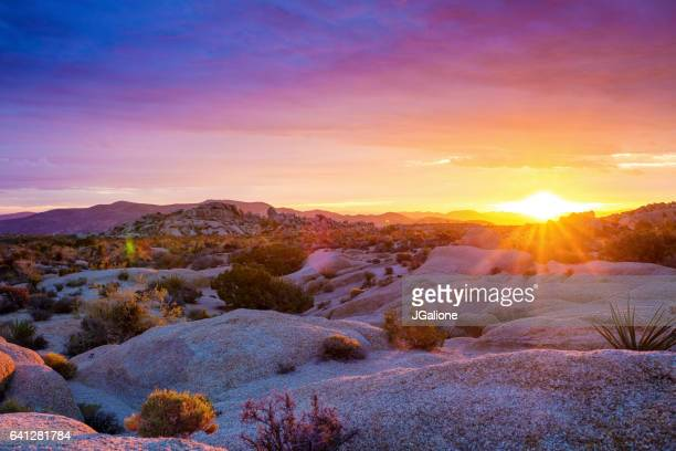 sunrise at joshua tree national park - california stock pictures, royalty-free photos & images