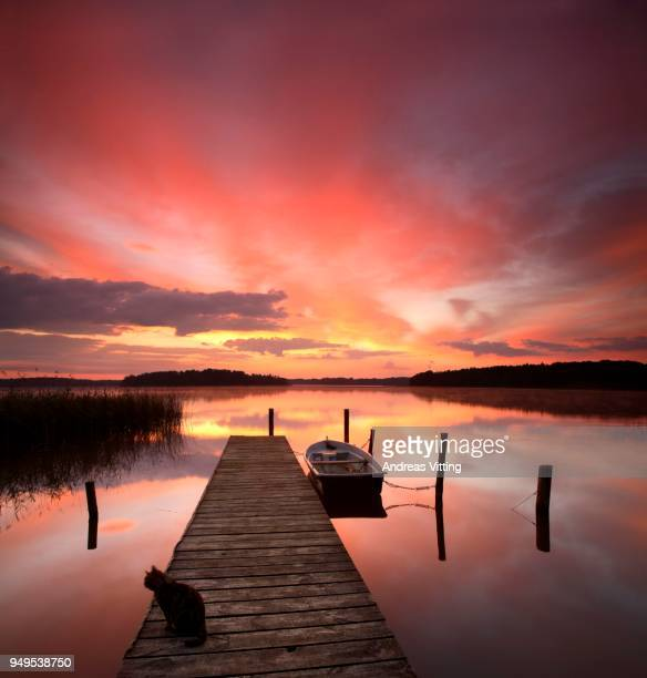Sunrise at Lake Rheinberger, cat sitting on pier, rowing boat, Rheinsberg, Brandenburg, Germany