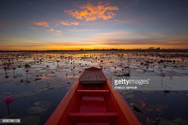 Sunrise at Lotus field Lake (Talay Bua daeng)