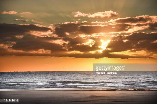 sunrise at patagonian shore - radicella stock pictures, royalty-free photos & images
