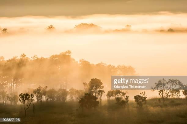 sunrise at savannah field, thung salaeng luang national park. - savannah stock photos and pictures